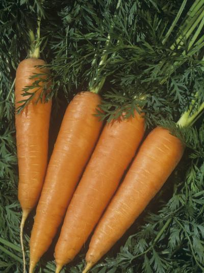 Carrots are Vegetables with a Tap Root (Daucus Carota)-Wally Eberhart-Photographic Print