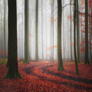 Autumnal Tracks by Carsten Meyerdierks