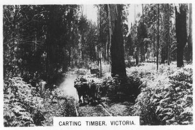 Carting Timber, Victoria, Australia, 1928--Giclee Print