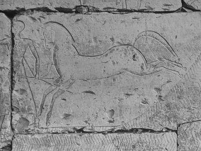 Carving of a Horse on Wall of Temple of Ramses II at Abydos--Photographic Print
