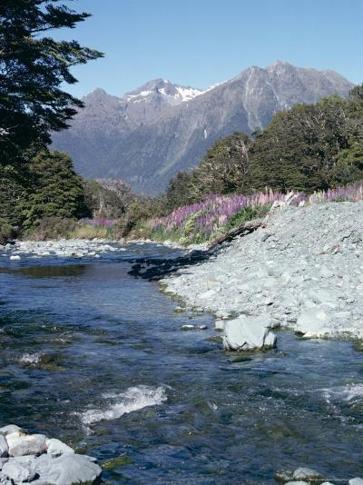 Cascade Creek and Stuart Mountains, South Island, New Zealand-Ian Griffiths-Photographic Print