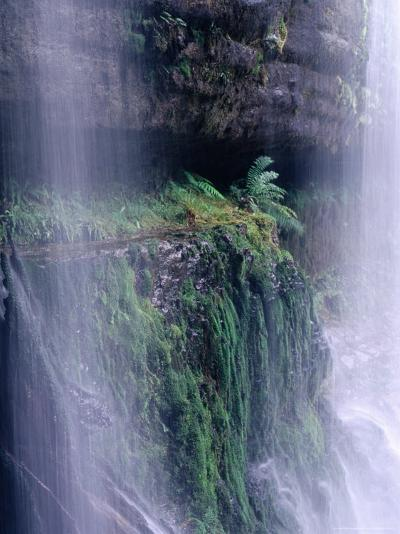 Cascading Waters of Russell Falls, Mt. Field National Park, Tasmania, Australia-Grant Dixon-Photographic Print