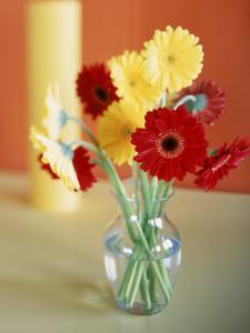 Red and Yellow Gerbera Daisies by Casey McNamara