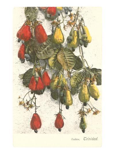 Cashew Plants, Trinidad--Art Print