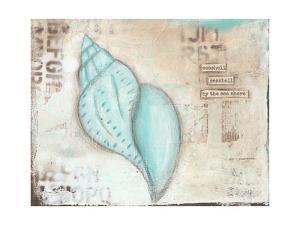 Seashell by Cassandra Cushman