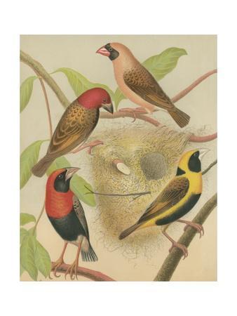 Birdwatcher's Delight II
