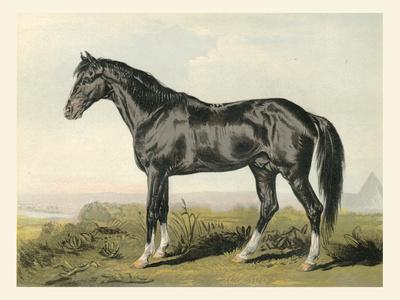 Cassell's Horse II