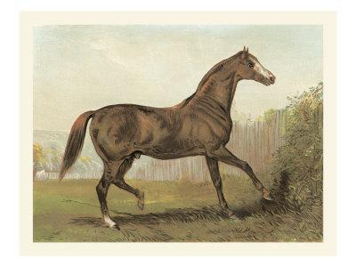 Cassell's Horse III