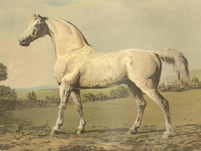 Cassell's Thoroughbred II