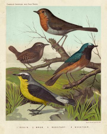 Robin, Wren & Redstart