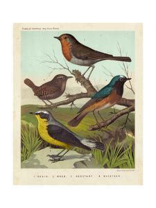 Robin, Wren & Redstart by Cassell