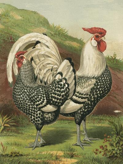 Cassell's Roosters III-Cassel-Art Print