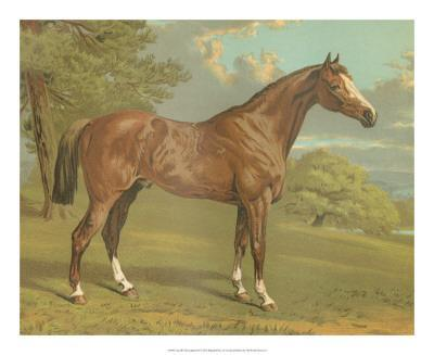 Cassell's Thoroughbred I-Cassell-Giclee Print