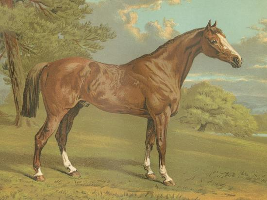 Cassell's Thoroughbred I-Cassell-Art Print