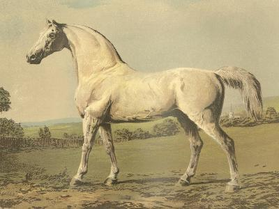 Cassell's Thoroughbred II-Cassell-Art Print