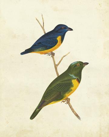 Peruvian Tanager I