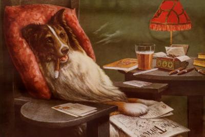 Bachelor's Dog