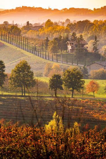 Castelvetro, Modena, Emilia Romagna-Francesco Riccardo Iacomino-Photographic Print