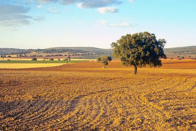 Castilla-La Mancha, Trees in Ploughed Agricultural Landscape Near Urda-Marcel Malherbe-Photographic Print