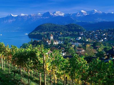 Castle and Vines, Spiez, Switzerland-Peter Adams-Photographic Print