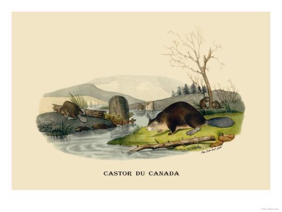 Castor du Canada-E^f^ Noel-Art Print