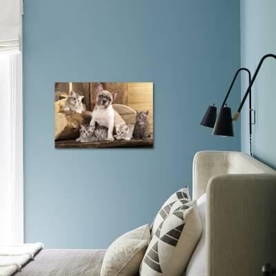 Cat And Dog, British Kittens And French Bulldog Puppy In Retro Background  Photographic Print by Lilun | Art com