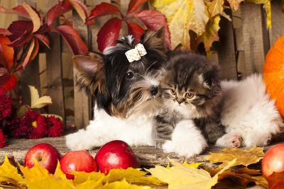 Cat And Dog, Kitten And Puppy-Lilun-Photographic Print