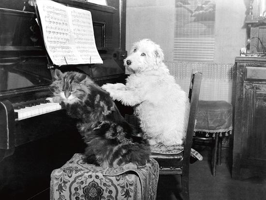Cat and Dog Playing Piano-Unknown-Art Print