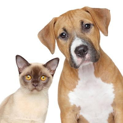 Cat and Dog Portrait on A White Background-Jagodka-Photographic Print