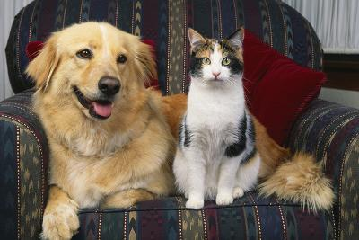 Cat and Dog Sitting Together-DLILLC-Photographic Print