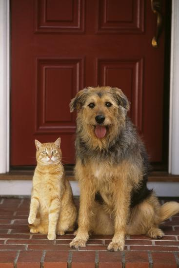 Cat and Dog Waiting in Front of Door-DLILLC-Photographic Print