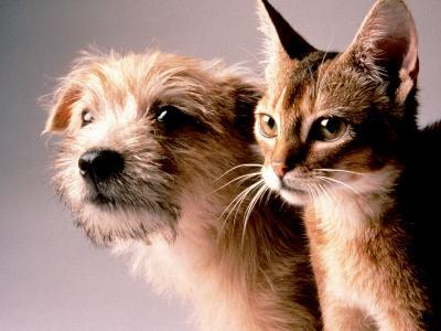Cat and Dog-Daniel Fort-Photographic Print