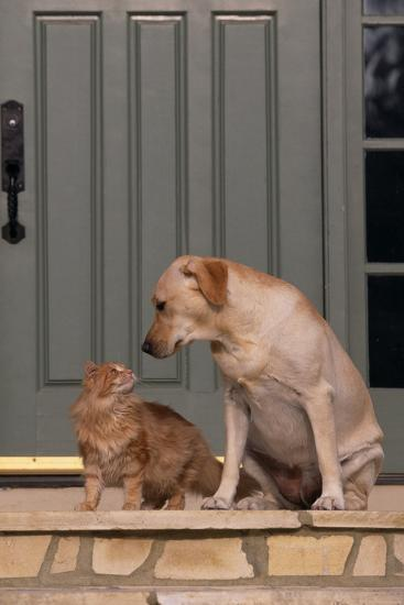 Cat and Labrador Sitting on Front Step-DLILLC-Photographic Print