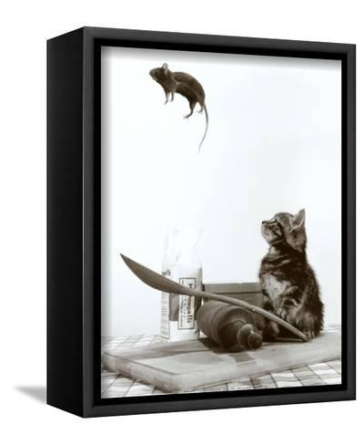 Cat and Mouse--Framed Canvas Print