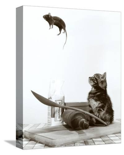 Cat and Mouse--Stretched Canvas Print