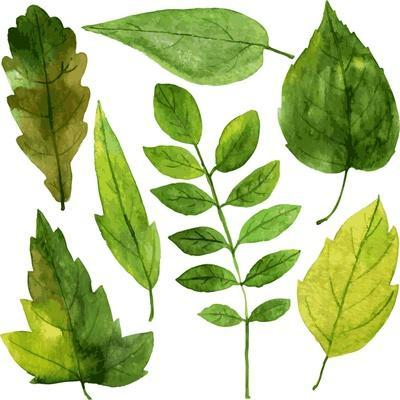 Set of Green Leaves Drawing by Watercolor, Hand Drawn Vector Elements