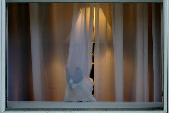 Cat Behind Window Curtain-Tyrone Turner-Photographic Print