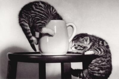 Cat Coffee Cup Twins