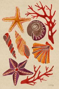 Seashells by Cat Coquillette