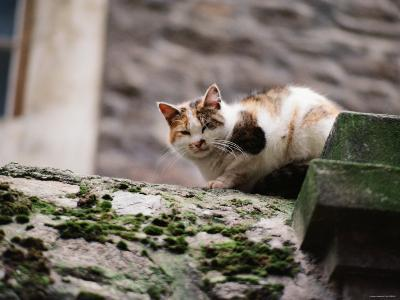Cat Crouch on Rocky Moss-Covered Surface--Photographic Print
