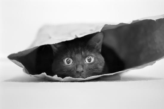 Cat in a Bag-Jeremy Holthuysen-Photographic Print