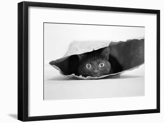Cat in a Bag-Jeremy Holthuysen-Framed Photographic Print