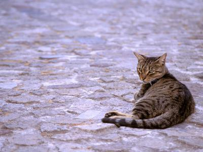 Cat in Street, Lipari, Sicily, Italy-Connie Bransilver-Photographic Print