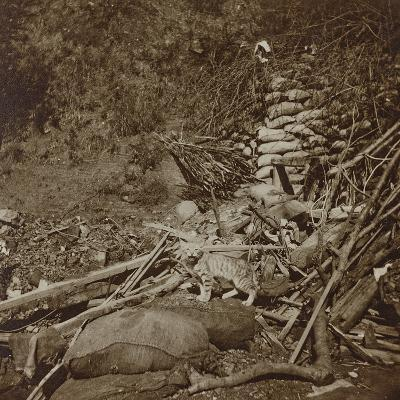 Cat in the Trenches--Photographic Print