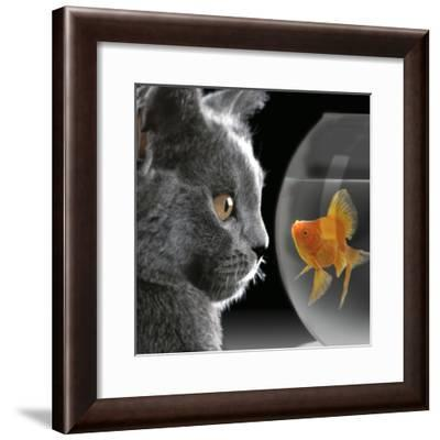Cat Looks at Goldfish in Bowl--Framed Photographic Print