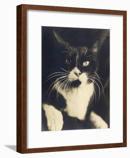 Cat Minus Me, Photograph Used in the Superimposed Photo Me and Cat-Wanda Wulz-Framed Photographic Print