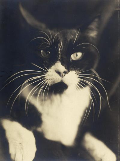 Cat Minus Me, Photograph Used in the Superimposed Photo Me and Cat-Wanda Wulz-Photographic Print