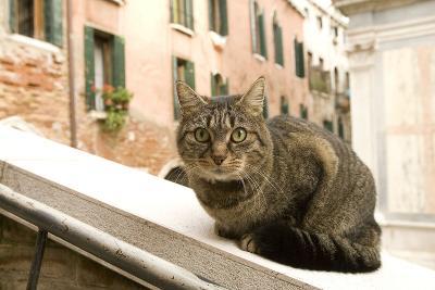 Cat on Ledge--Photographic Print