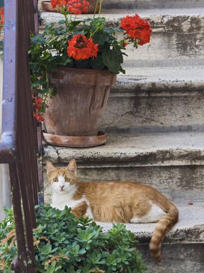 Cat On Steps in Alley, Rovigno, Croatia-Adam Jones-Photographic Print
