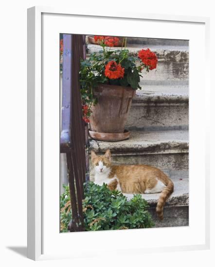 Cat On Steps in Alley, Rovigno, Croatia-Adam Jones-Framed Photographic Print